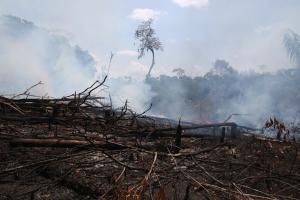 No período até 2018, a maior floresta tropical do planeta viu desaparecer 8% de sua cobertura, substituída, principalmente, por áreas de pastagem