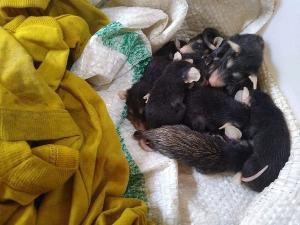 Animais foram levados para o Centro de Reintrodução de Animais Selvagens (Cereias), em Aracruz