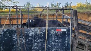 Um dos alvos da operação é o dono de uma chácara em Vila Cajueiro, Cariacica, que foi preso. Ele é suspeito de roubar gado de propriedades rurais e vender