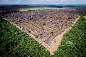 A destruição da natureza é um caminho perigoso. Logo, a ideia de que é necessário abrir mão do patrimônio ambiental para desenvolver a economia é falsa e não atende aos interesses da sociedade