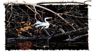 Defensores do mangue apontam os caminhos para recuperar ecossistema considerado berço da natureza e também da cultura do Espírito Santo