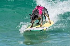 Com dois títulos mundiais conquistados nos EUA, a cadela surfista capixaba é a única do Brasil a competir em quatro categorias na prancha