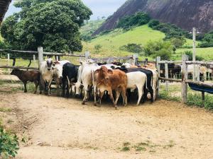 A operação policial para a recuperação dos animais aconteceu em Carlos Chagas, no estado de Minas Gerais; o gado havia sido furtado no Norte do ES