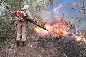 Os dados revelam que, entre janeiro e agosto, foram registrados pelos satélites do Inpe um total de 10.153 focos de incêndio no Pantanal