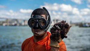 Trabalho extrativista e artesanal, a cata do sururu gera renda familiar e abastece as mesas capixabas reforçando nosso vínculo com o mar