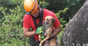 Suspeita é de que os três cachorros estivessem presos há dias; para salvá-los, agentes precisaram fazer um rapel na pedra; veja vídeo