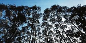 Oportunidades são para atuar nas operações florestais na Bahia, Espírito Santo e Minas Gerais; são cerca de 150 chances para quem tem nível fundamental