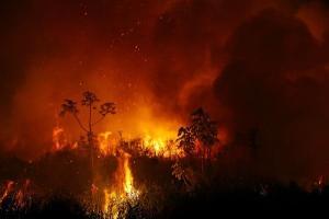 Neste ano, bioma já teve 2,9 milhões de hectares queimados, o que equivale a 311 vezes a área da capital do ES, Vitória. Mesmo assim, Ibama diminuiu fiscalizações e governo não gastou nem 1% do dinheiro destinado a programas de preservação