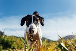 O texto altera a Lei de Crimes Ambientais, de 1998, e cria um item específico para a proteção de cães e gatos