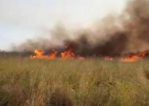Área de cerca de 100 hectares, o equivalente à 140 campos de futebol, já foi consumida pelo fogo, de acordo com o Corpo de Bombeiros. Veja vídeos