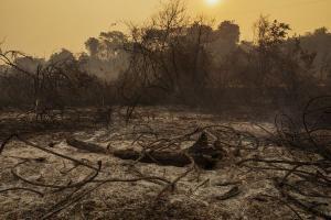 Especialistas ouvidos pela reportagem de A Gazeta falaram se existe a possibilidade da fumaça das queimadas alcançar terras capixabas
