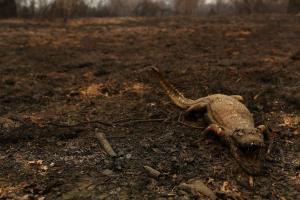 Em área, as queimadas já consumiram neste ano cerca de 23% do bioma, segundo estimativas do Laboratório de Aplicações de Satélites Ambientais (Lasa)