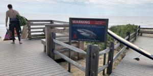 Cape Cod's New Normal: Sharks Are Everywhere
