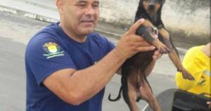 Animal estava preso e assustado em vegetação que descia o Rio Itapemirim na manhã desta quinta-feira (25); guarda usou canoa para fazer resgate