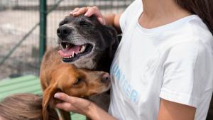 Comentarista do quadro Club Pet CBN, da CBN Vitória, a médica veterinária Tatiana Sacchi explica as vantagens de adotar um animalzinho adulto