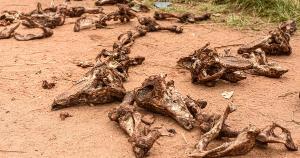 Segundo a prefeitura, trata-se de um descarte irregular de carcaças; retirada será providenciada e o Instituto de Defesa Agropecuária e Florestal acionado