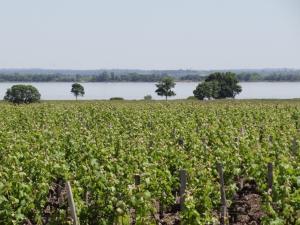 Naquele ano, os melhores vinhos da icônica região francesa foram divididos em Premiers, Deuxièmes, Troisièmes, Quatrièmes e Cinquièmes Crus Classés
