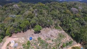 Fiscalização em áreas de Mata Atlântica emitiu cerca de 50 autuações por desmatamento ilegal, loteamento irregular e queimadas no Estado
