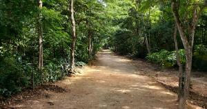 Na área de Mata Atlântica serão plantadas 211 árvores representando cada uma das vítimas da pandemia no município