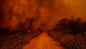 À frente da comissão do Senado que acompanha os incêndios no Pantanal, o senador Wellington Fagundes (PL-MT) trabalha para que o Estatuto do Pantanal seja concluído nos próximos meses