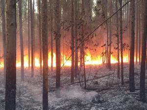 A equipe de jornalismo da TV Gazeta Norte esteve no local das queimadas e informou que o fogo destruiu grande parte da área