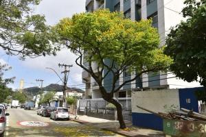 Em locais de clima quente e úmido, como o caso de Vitória, o sombreamento proporcionado pelas copas das árvores auxilia no conforto térmico e assim possibilita uma maior utilização dos espaços públicos abertos