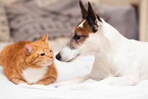 Expectativa da Secretaria de Estado da Saúde (Sesa) é vacinar cerca de 630 mil cães e gatos até o próximo dia 15 de novembro