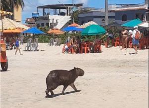 Animal chamou a atenção dos banhistas na Praia de Itaoca, em Itapemirim, na manhã desta terça-feira (16)