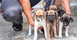 'Eu fiquei surpreso e impressionado, mas rapidamente os militares se mobilizaram e compraram ração para alimentar os cães', disse o sargento Paulo, que encontrou os animais