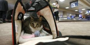 U.S. Proposes Tighter Rules for Emotional Support Animals on Flights