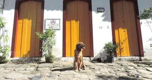 Larissa Rios dos Santos, turismóloga e terapeuta integrativa e sistêmica, fala sobre o crescimento do turismo de quatro patas no Brasil, como escolher a hospedagem pet friendly, qual a melhor programação tutor/animal, entre outras coisas