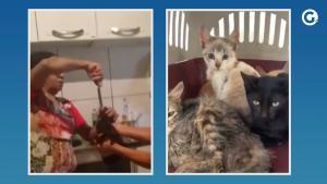 Nas imagens, a aposentada aparece tentando colocar algo na boca do animal, semelhante a pimenta, com uma faca; Polícia Civil investiga o caso
