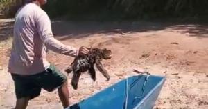 Pai e filho estavam pescando quando se deparam com um bicho-preguiça na água. O animal não parecia estar se afogando, mas se aproximou do barco e ganhou uma carona
