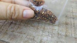 Análise de laboratório do governo federal mostrou que amostras continham ervas daninhas e fungos que apresentam risco para a agricultura