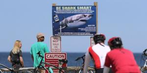 No Magic Bullet to Ward Off Cape Cod Sharks, Study Finds