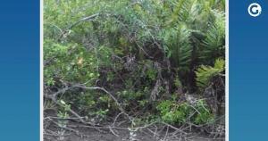 O corpo foi encontrado em uma ilha do Rio Itabapoana, na localidade de Praia das Neves, no final da manhã desta quinta (30). Polícia achou cápsulas de revólver ao lado do corpo
