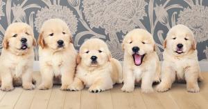 Saiba como escolher um estabelecimento sério na hora de comprar o seu animal de estimação e quais os seus direitos caso o cachorro ou gato apresente problemas logo depois de adquirido
