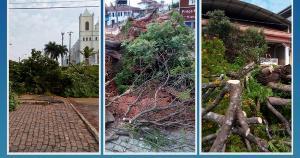 Segundo a administração municipal, árvores estavam velhas, cheias de cupim e prejudicavam a estrutura da praça central da cidade e outras serão plantadas no local
