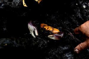 O Espírito Santo já foi autossuficiente na produção de caranguejo. Mas hoje 75% do crustáceo comercializado no Estado é do manguezal baiano
