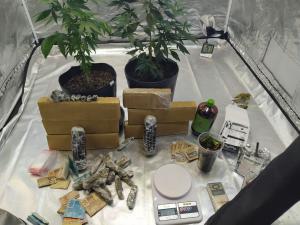 Homem de 32 anos foi preso com um laboratório para o cultivo de maconha em casa; afirmou aos agentes que decidiu se tornar traficante após perder o emprego de garçom