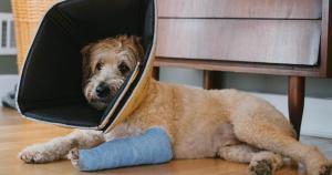 O médico veterinário, cirurgião ortopédico e neuroespinhal, Fabricio Pagani, fala sobre os traumas mais frequentes de cães e gatos, o que fazer em caso de um acidente e como evitá-los