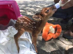 O animal foi encontrado na região do Parque Estadual da Pedra Azul. O bichinho está sob os cuidados de veterinários do Instituto Estadual de Meio Ambiente do ES