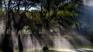 O fotógrafo Vitor Jubini percorreu as ruas de Vitória e produziu um ensaio que relembra as árvores que estão presentes na vida e na história da Capital