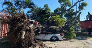 As rajadas intensas da última noite arrancaram uma árvore pela raiz, que foi parar sobre três veículos. O local fica na estrada que dá acesso ao Porto de Capuaba, no bairro Ilha da Conceição