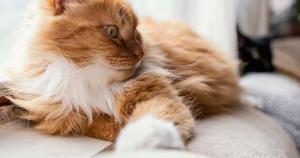 Seu gatinho é da pá-virada? Então, confira as dicas da médica veterinária Polyana Pulcheira Paixão para deixá-lo mais calmo. Acredite, não é necessário devolver os bichanos mais espevitados, com paciência e criatividade eles são capazes de entender as regras da casa