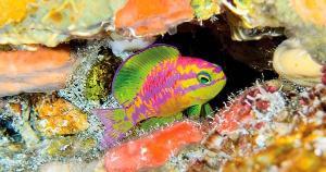 Parceria entre brasileiros e americanos encontrou quatro espécies novas no arquipélago; exploração parecida deve ocorrer na Ilha de Trindade