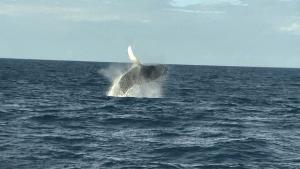 Os animais saem todos os anos da Antártida para se reproduzirem nas águas quentes do mar brasileiro; o Estado está no caminho das gigantes para o 'berçário' de Abrolhos