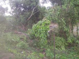 Em pelo menos quatro cidades do Sul do Espírito Santo, a chuva – até de granizo – e vento forte provocaram alagamentos e quedas de árvores, além de destelhamento de casas. Moradores registraram vídeos mostrando o temporal