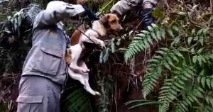 A cachorrinha, identificada, Nina estava desaparecida há duas semanas e foi resgatada após vizinhos ouvirem latidos na região. O animal estava desaparecido há 10 dias