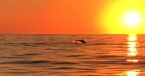 Um grupo de golfinhos foi filmado no domingo (28) próximo à Ilha do Gambá, um dos pontos turísticos do balneário no Sul do ES